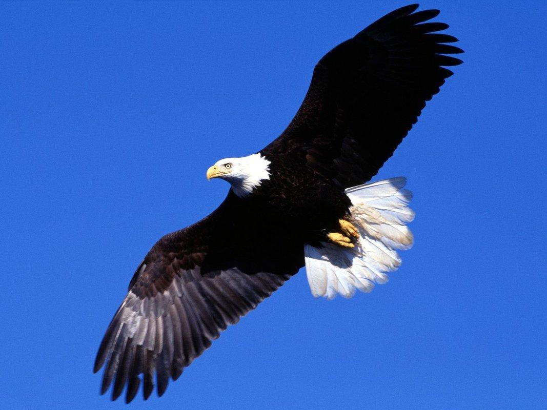 How symbols serve inspired leaders cultbranding symbols bald eagle buycottarizona